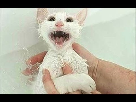 Cats just don't want to bath - Funny cat bathing compilation