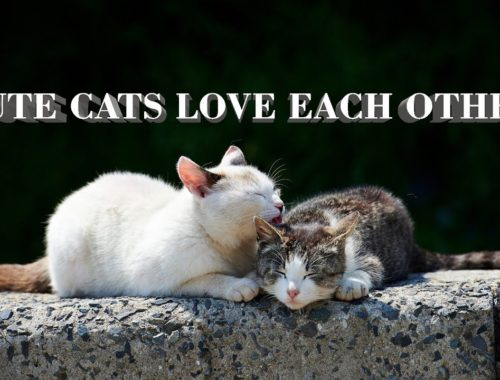 Cute cats love each other and kittens,Cats and Dogs Life