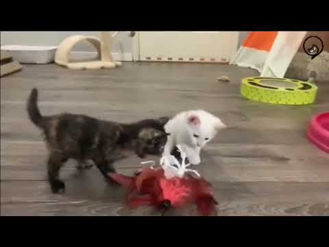 Funny Cats and Cute Kittens Will Make Your Day Part 41