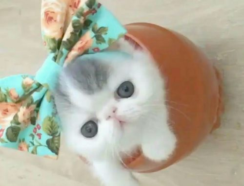 😻Very Cute Cats & Kittens 😻 ll Cute Kittens Meowing ll Cute Kittens Video