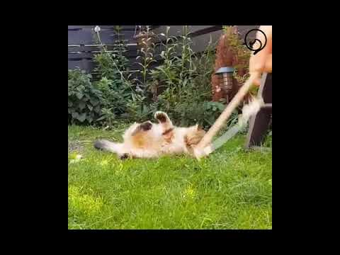 Funny Cats and Cute Kittens Will Make Your Day Part 47