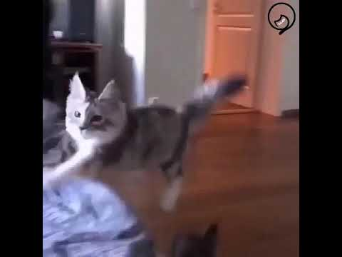 Funny Cats and Cute Kittens Will Make Your Day Part 53