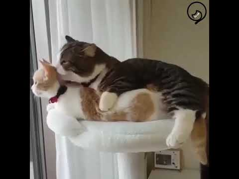 Funny Cats and Cute Kittens Will Make Your Day Part 57