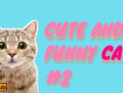Cute CATS and Funny compilation No.2 [Pets hub]  2019  ❤️