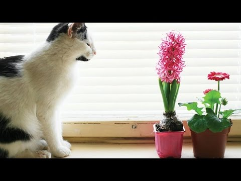 Cats vs owners – Funny & cute cats compilation