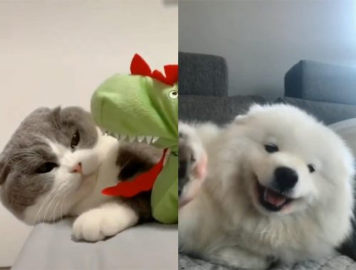 💗Funny & Cute Cats & Dogs Compilation #4 - Cutest Pets 2019😻😽🐭