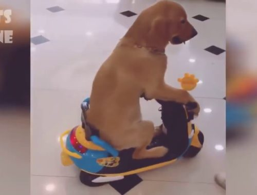 Cute Cats and Dogs funny videos
