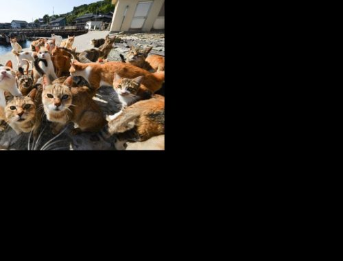 The Naughtiest Cat Ever -  Funny Cute Kittens Video Vines 2019 #30