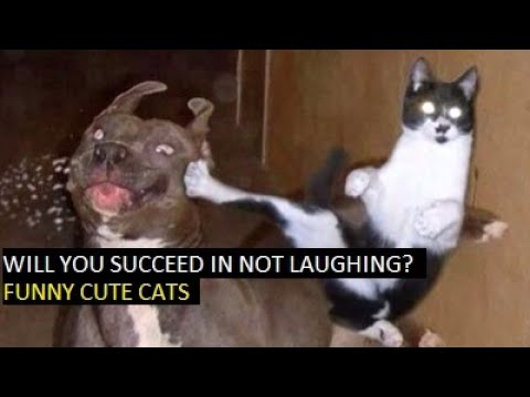 Will you succeed in not laughing? - Funny cute cats