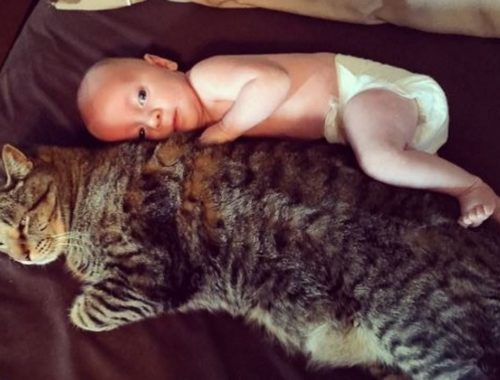 Cute Cats And Babies Cuddling Compilation