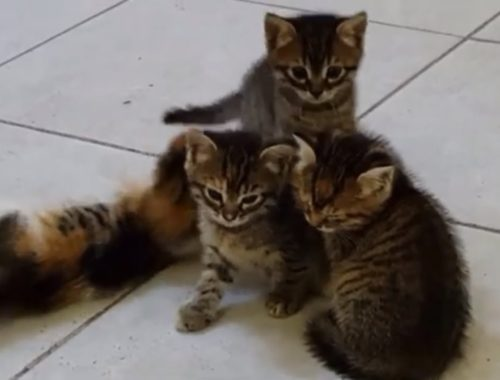 Funny Cats Office Cat  PSIKO  and her cute kittens