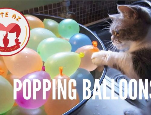 Cats Vs. Balloons 🐱🎈 Funny and Cute Cats Playing Balloons Compilation 2019