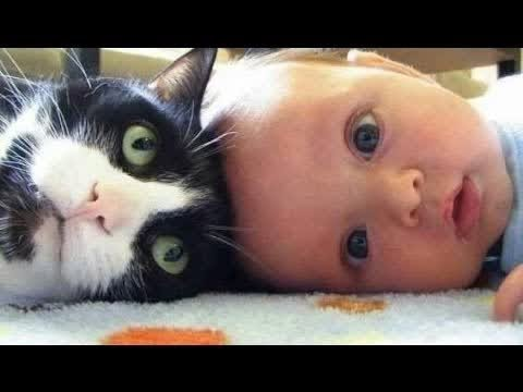 NEW BEST TOP 10 Cute Cats Love Babies Compilation