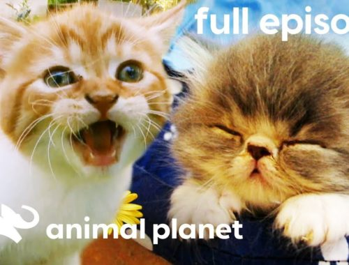 Crowning America's Cutest Cat (Full Episode)