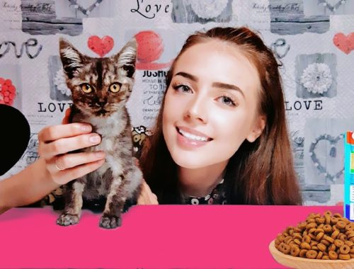 ASMR | STRAY KITTEN 🐱 THE CUTEST VIDEO EVER #cats