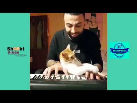 Cute Cats Compilation 6