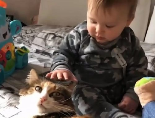Top Cute Cats Playing With Babies - Lovely Pet Moments