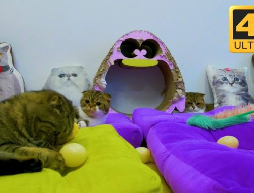 UHD Cat Cafe Relaxing Cute Cats on Catnip and Pillows 😍🤗
