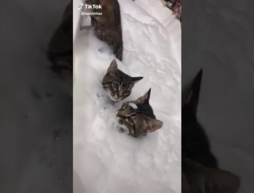 Cute kitties having a bath