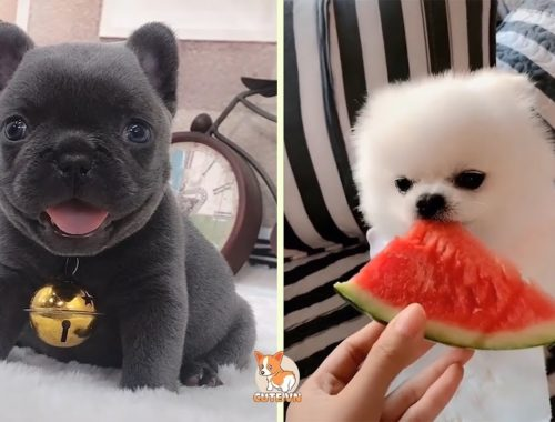 💗Aww - Funny and Cute Dog and Cat Compilation 2019💗 #19 - CuteVN