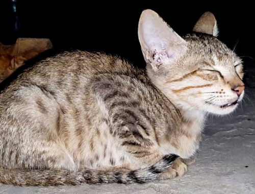Cute Kittens Meowing In The Night