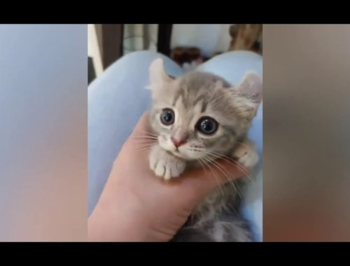 Cute Cats #2 Funny moment of cats Funny Animals #2