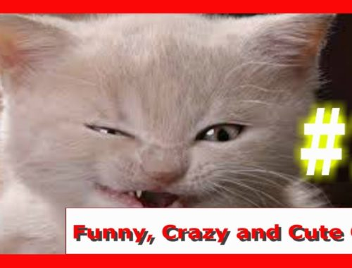 Funny, crazy, and cute cats #1