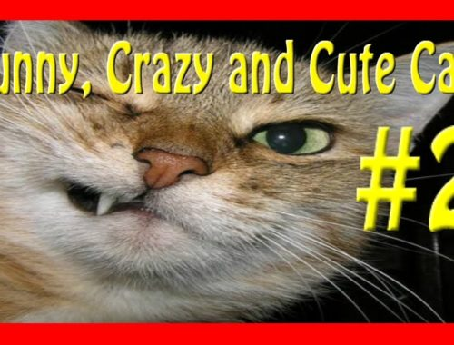 Funny, crazy and cute cats #2