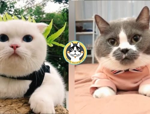 🌟Most Cute and Funny Cats Compilation🌟 CM01 | Cute Animal TV