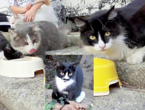 The best Holiday Activity with Stray Cats (Cute Kittens and Cats)