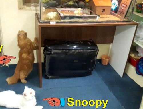 Meet Our Cute Cats Lucy & Snoopy