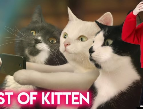 Best Kitten in The World - 2019 OCT _ Mega Collection - Cute Kitty 2019 - Funny Kitten 2019