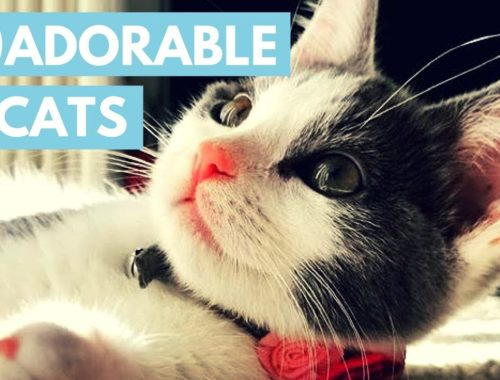 Try Not To Awww At These Cute Cats!
