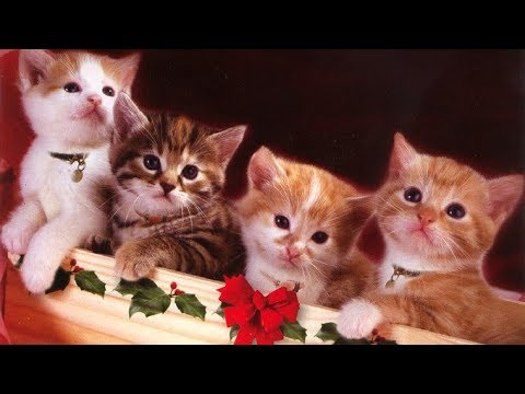 Cute Christmas Kittens Images