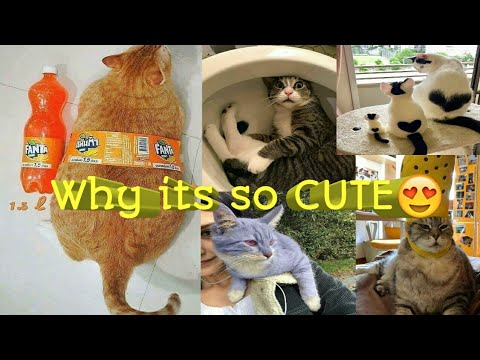 CUTE FUNNY KITTENS COMPILATION 😍