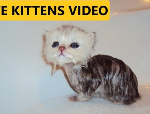 Two so many cute kittens 3-4 weeks old Compilation Video Photo