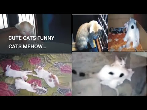 CUTE CATS FUNNY CATS MEHOW MEHOW FUNNY VIDEO