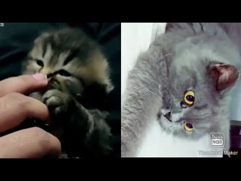 🥰AWWW🥰CUTE CATS COMPLICATION MOST FUNNY CATS VIDEO 2019