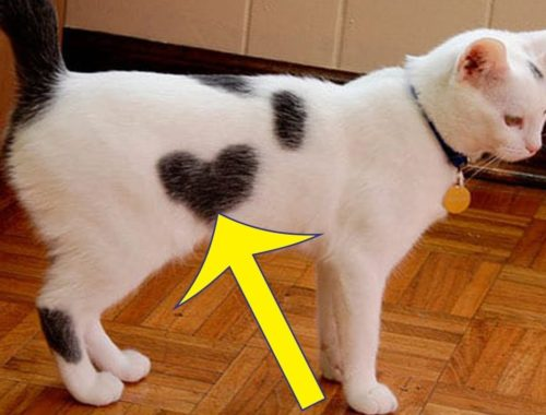 These Cute Cats Wear Their Hearts On Their Fur