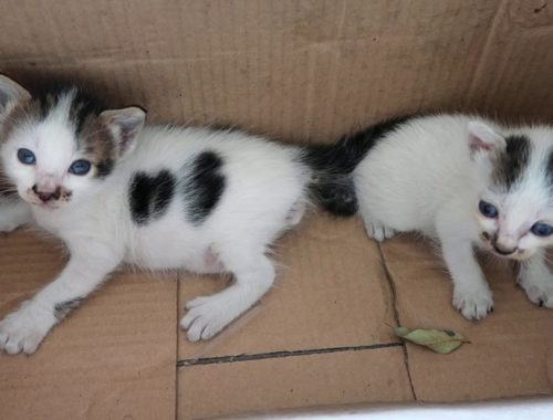 Two Cute Kittens Just Born in my Box Home