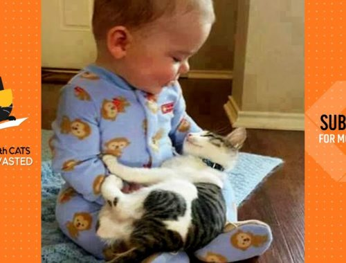 Cute is Not Enough 🐱 Play with baby | Cute Cats Video 2019