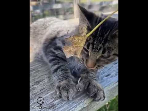 Funny Cats and Cute Kittens Will Make Your Day Compilation Part 107