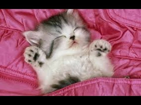 Funny Cats Sleeping Cute Cats Complitaion CAT TREATS