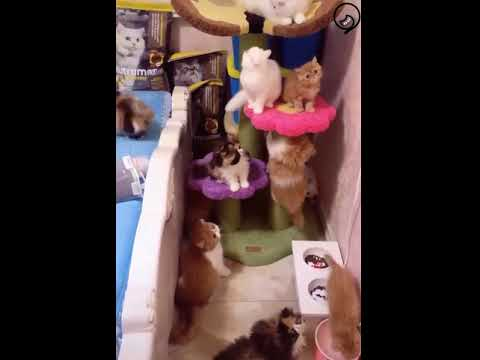 A Room Full of Cute Cats