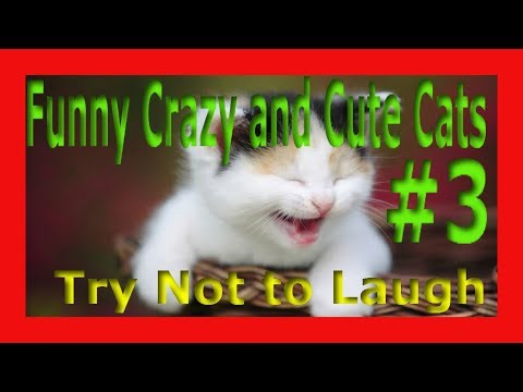 FUNNY CRAZY AND CUTE CATS #3 - TRY NOT TO LAUGH