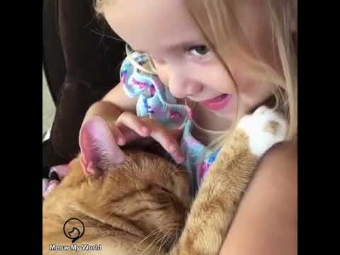 Funny Cats and Cute Kittens Will Make Your Day Compilation Part 112