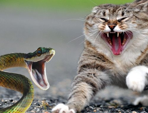 Cute cats VS Snake,Cats and Dogs Life