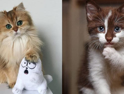 Kitty Adorable Cute Cats # 30