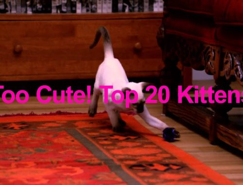 Too Cute! Top 20 Kittens | Saturday 9pm E/P