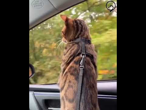 Funny Cats and Cute Kittens Will Make Your Day Compilation Part 119